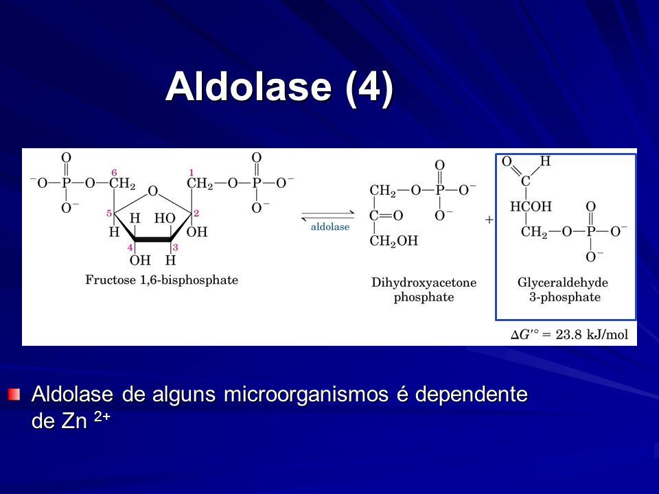 Aldolase (4) Aldolase de alguns microorganismos é dependente de Zn 2+