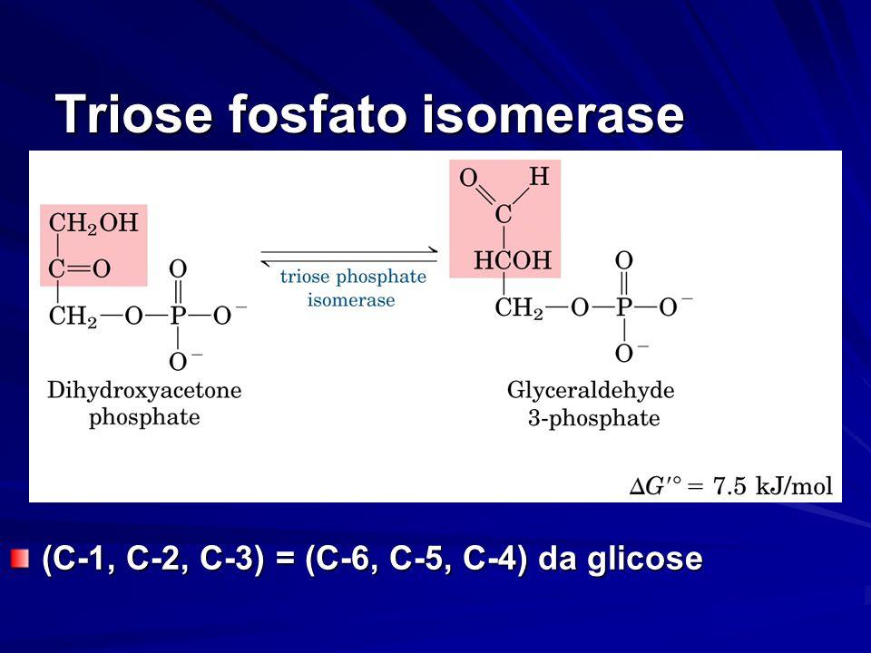 Triose fosfato isomerase