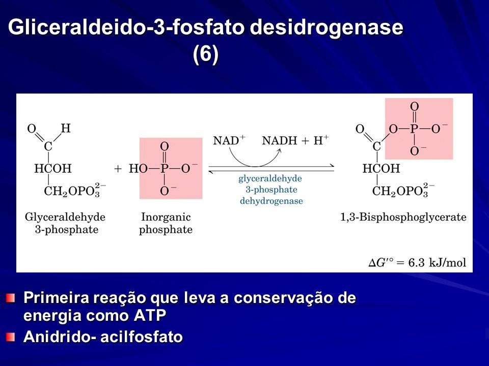 Gliceraldeido-3-fosfato desidrogenase (6)