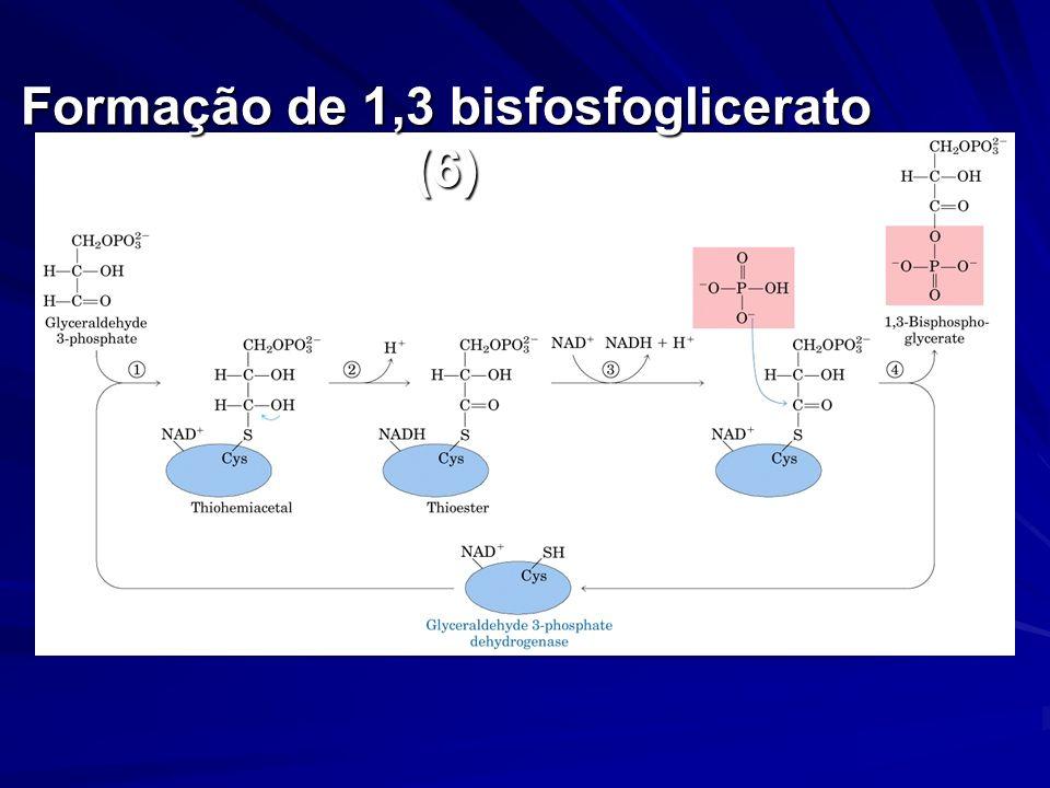 Formação de 1,3 bisfosfoglicerato (6)