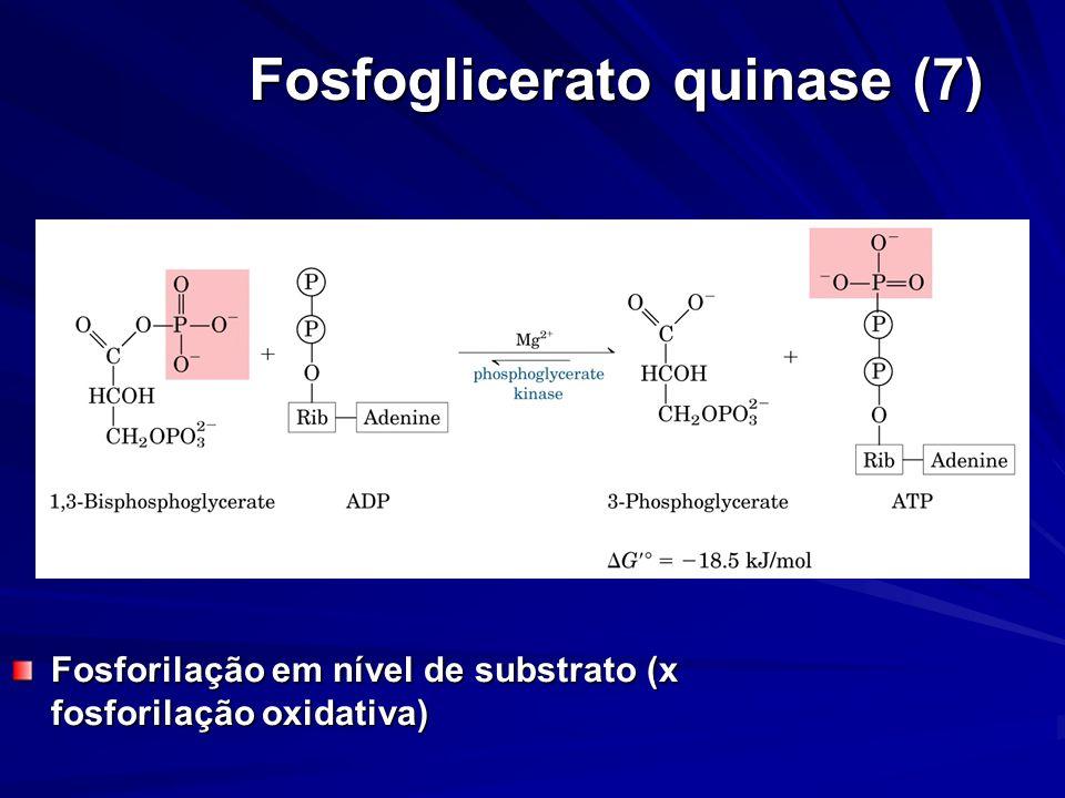 Fosfoglicerato quinase (7)