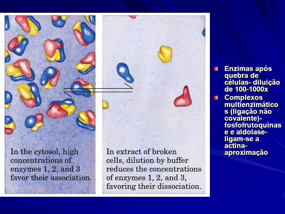 Enzimas após quebra de células- diluição de 100-1000x