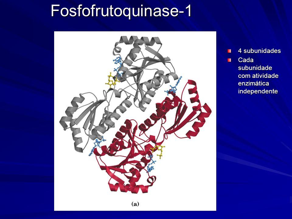 Fosfofrutoquinase-1 4 subunidades