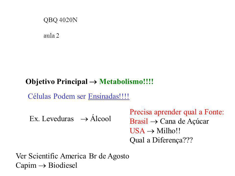 Objetivo Principal  Metabolismo!!!!