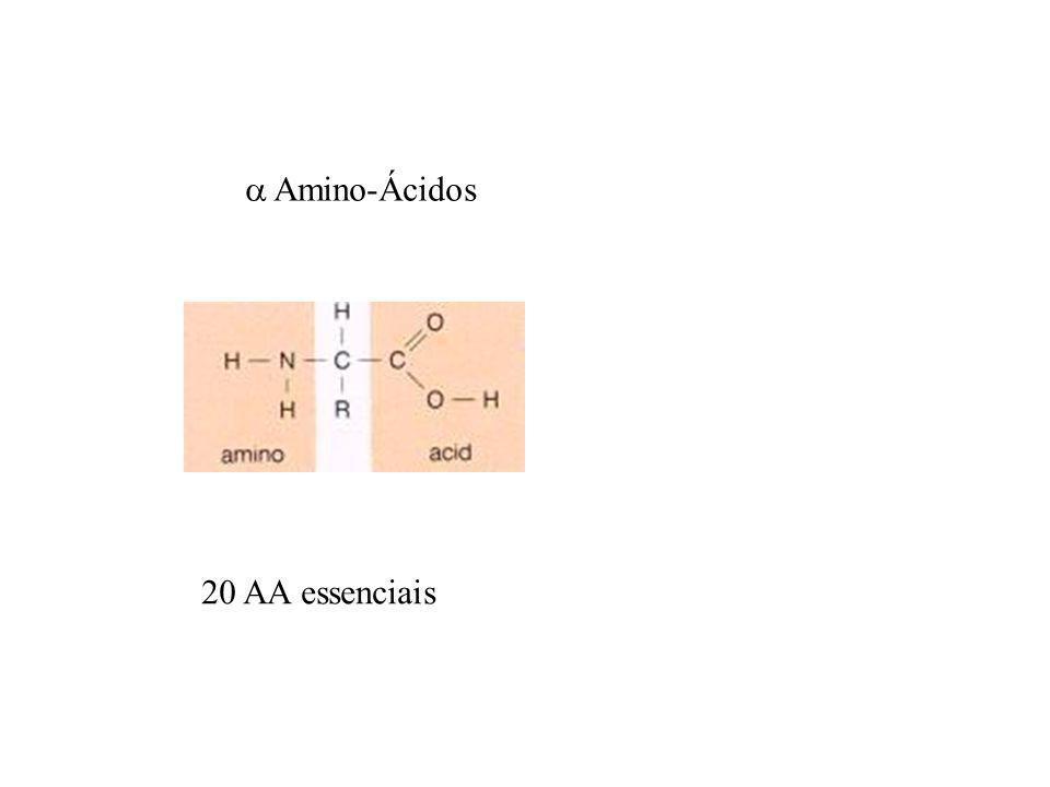  Amino-Ácidos 20 AA essenciais