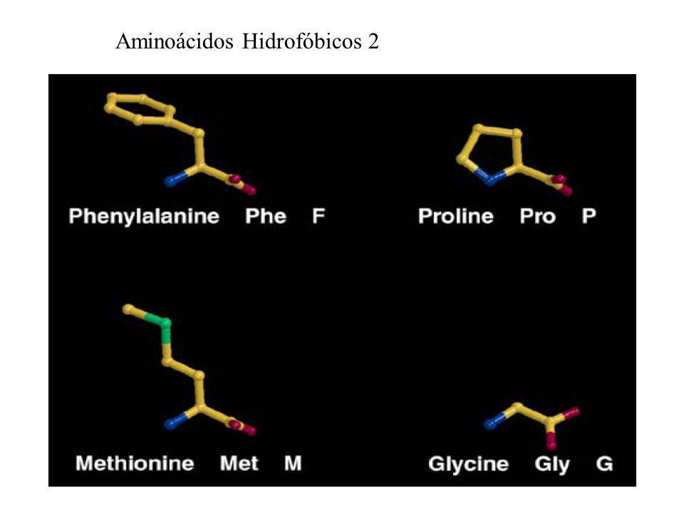 Aminoácidos Hidrofóbicos 2