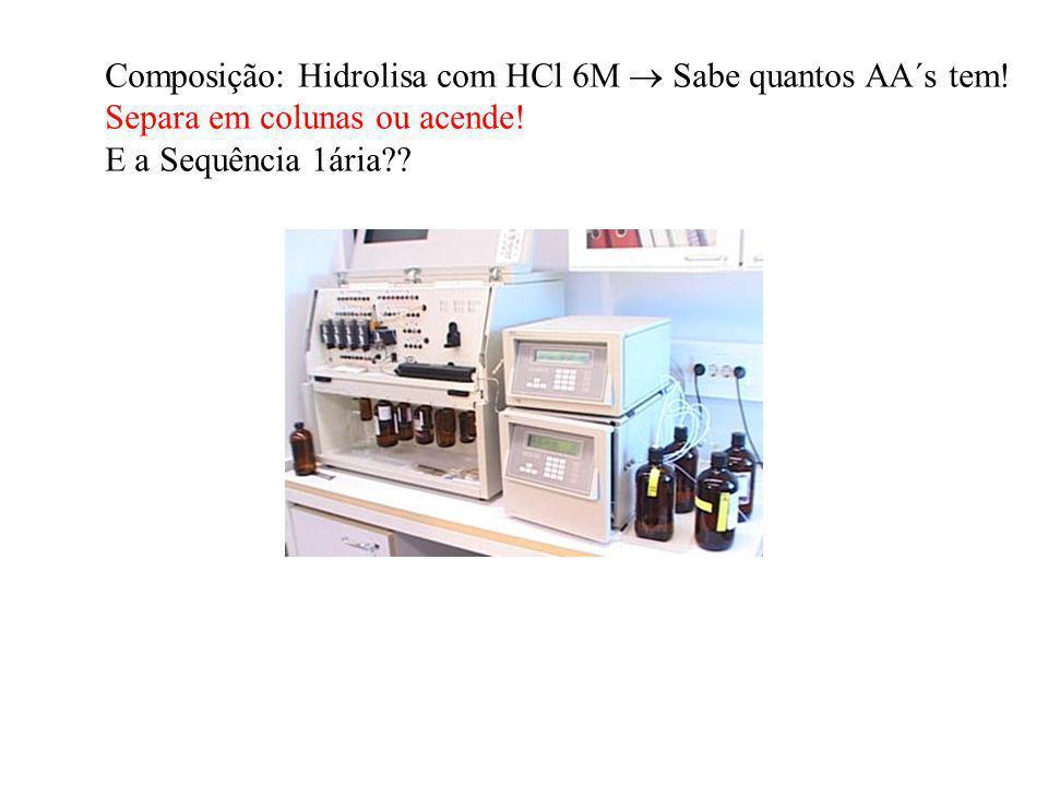 Composição: Hidrolisa com HCl 6M  Sabe quantos AA´s tem!