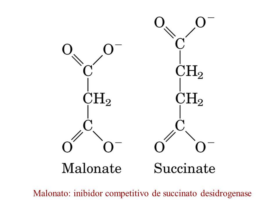 Malonato: inibidor competitivo de succinato desidrogenase