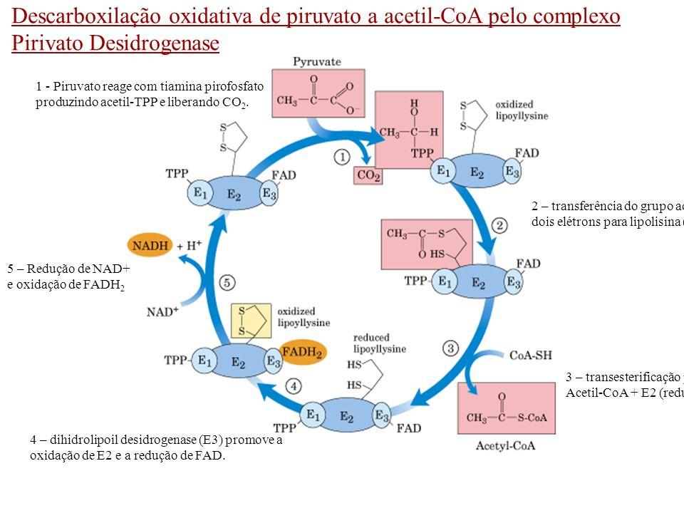Descarboxilação oxidativa de piruvato a acetil-CoA pelo complexo