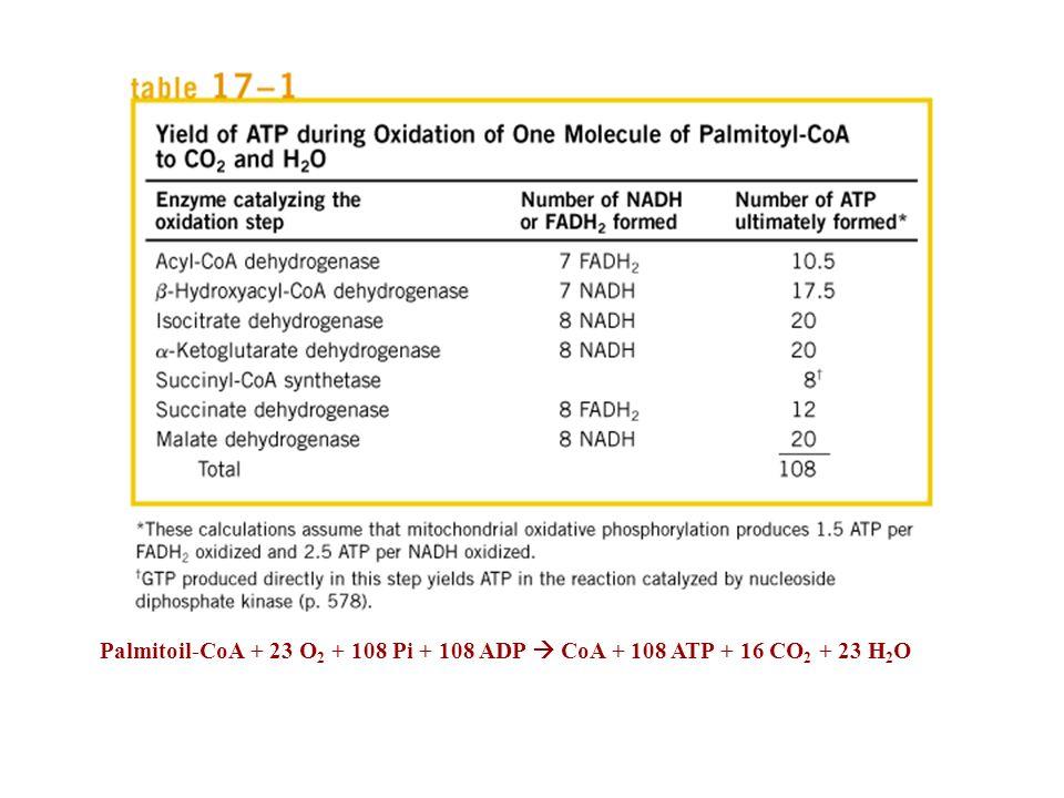 Palmitoil-CoA + 23 O2 + 108 Pi + 108 ADP  CoA + 108 ATP + 16 CO2 + 23 H2O