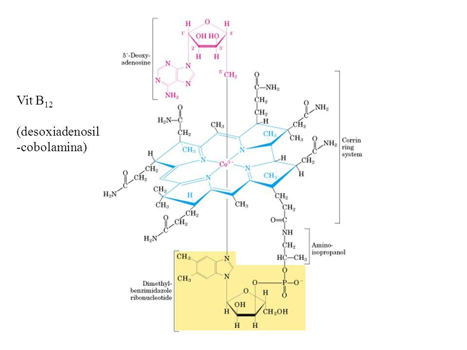 Vit B12 (desoxiadenosil -cobolamina)