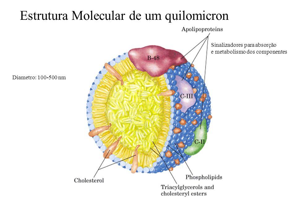 Estrutura Molecular de um quilomicron