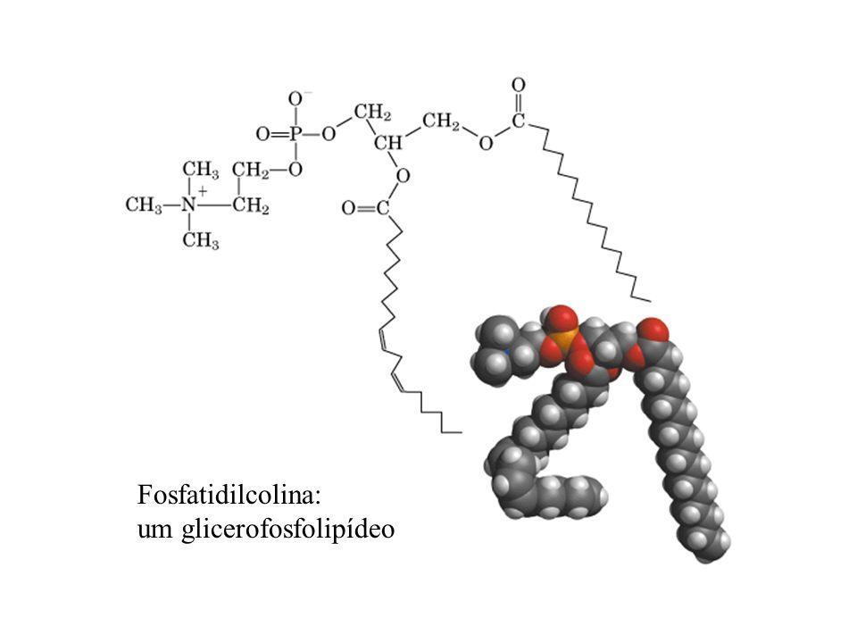 Fosfatidilcolina: um glicerofosfolipídeo