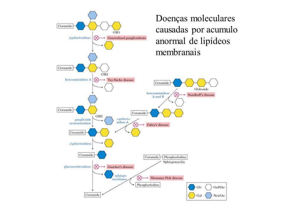 Doenças moleculares causadas por acumulo anormal de lipídeos membranais