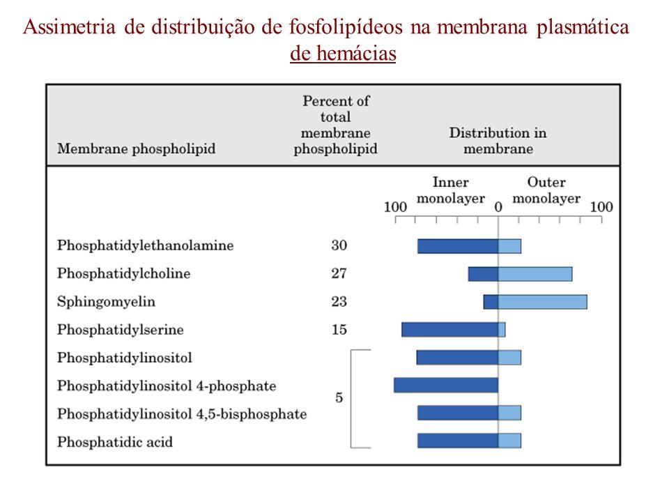 Assimetria de distribuição de fosfolipídeos na membrana plasmática