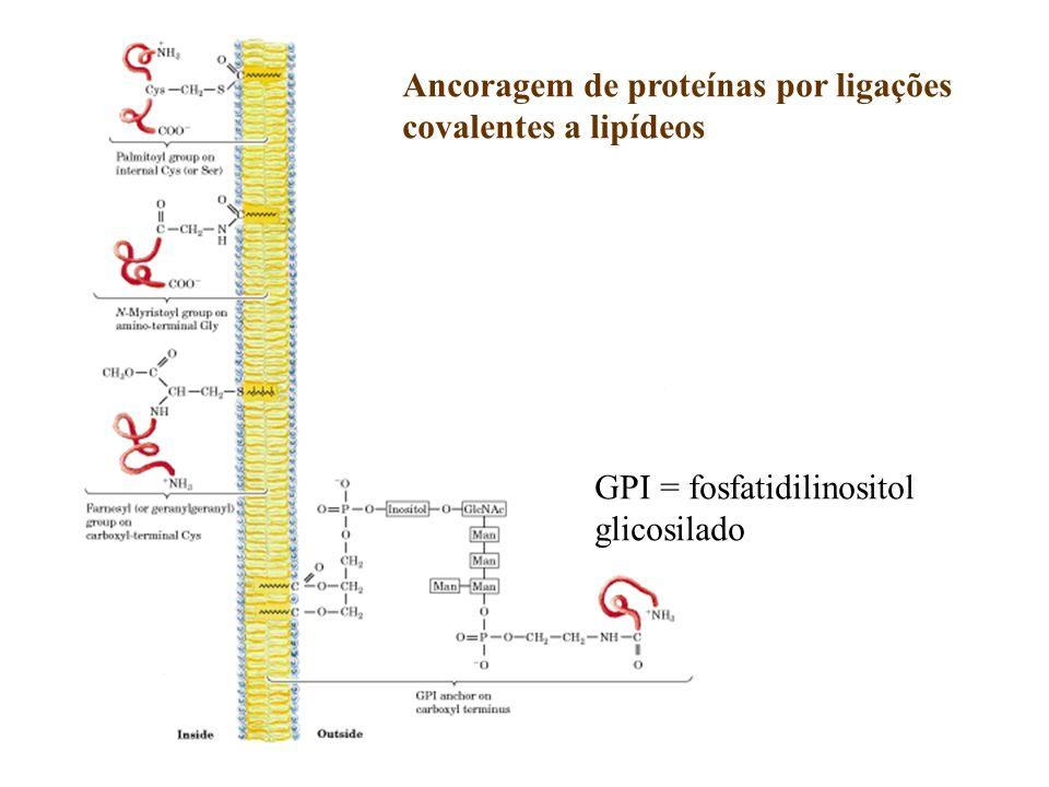 Ancoragem de proteínas por ligações
