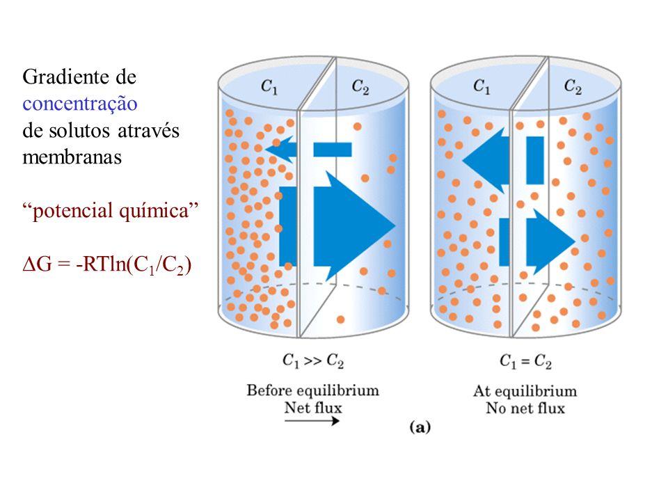 Gradiente de concentração de solutos através membranas potencial química DG = -RTln(C1/C2)
