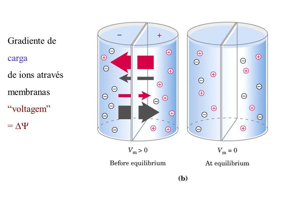 Gradiente de carga de ions através membranas voltagem = DY