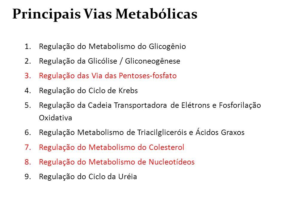 Principais Vias Metabólicas