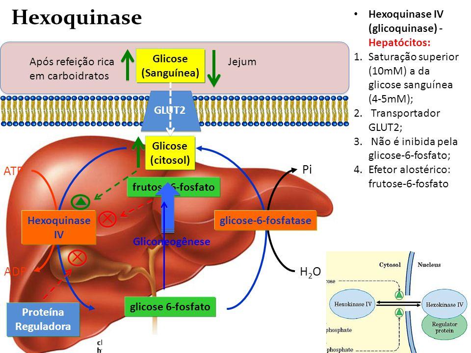 Hexoquinase ✕ ✕ H2O Pi ATP ADP