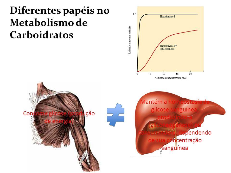 Consome glicose (produção de energia)