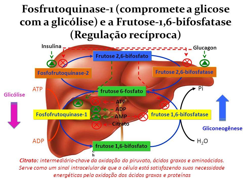 Fosfrutoquinase-1 (compromete a glicose com a glicólise) e a Frutose-1,6-bifosfatase (Regulação recíproca)
