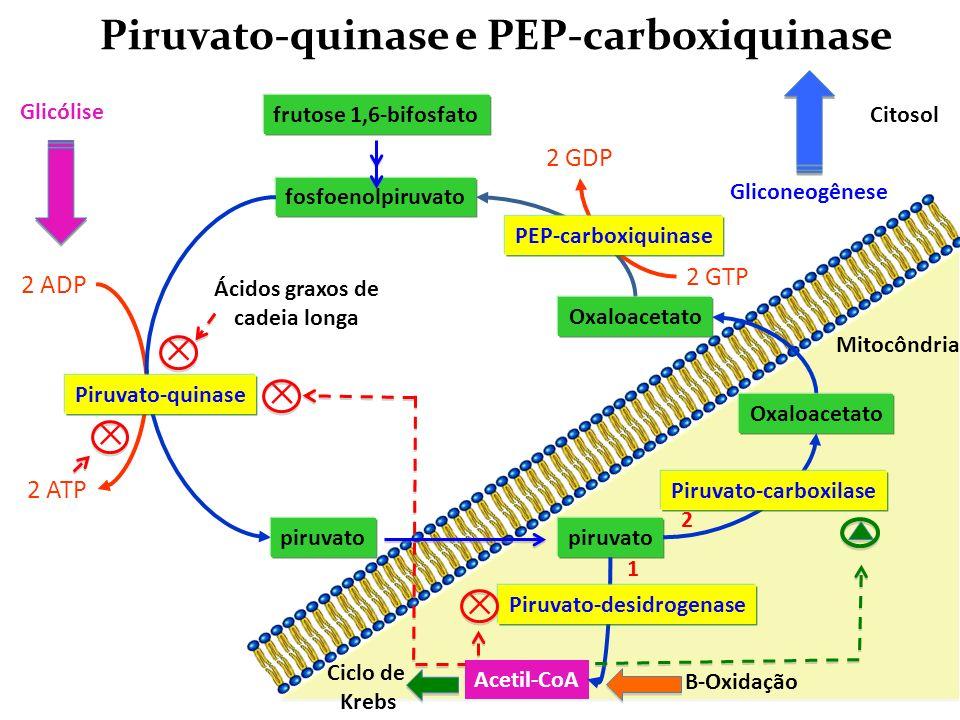 Piruvato-quinase e PEP-carboxiquinase