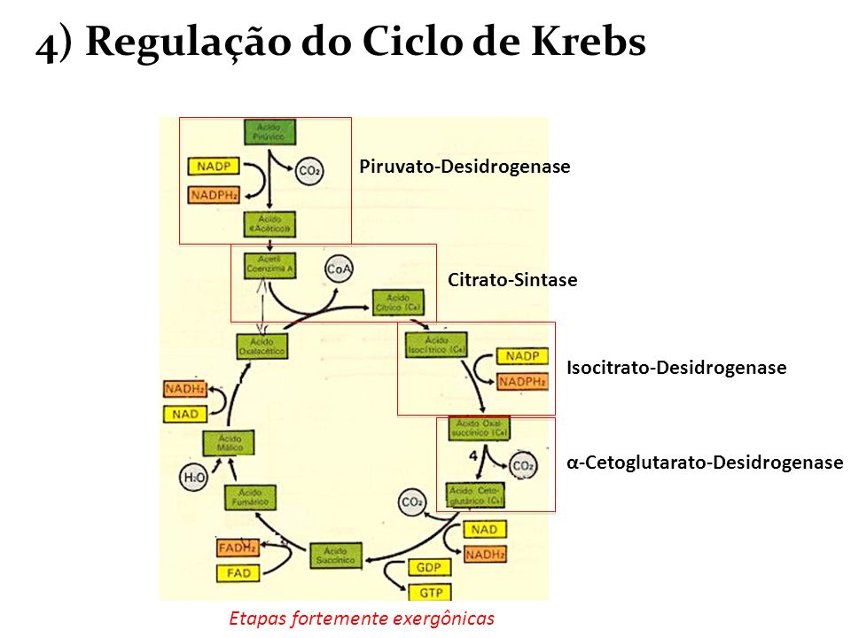 4) Regulação do Ciclo de Krebs