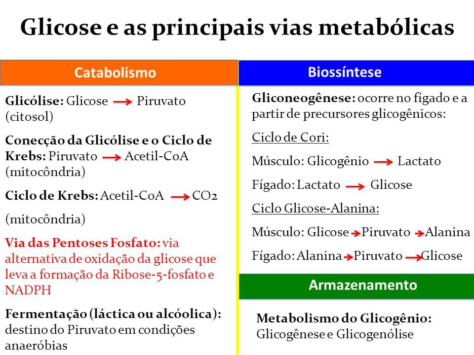 Glicose e as principais vias metabólicas