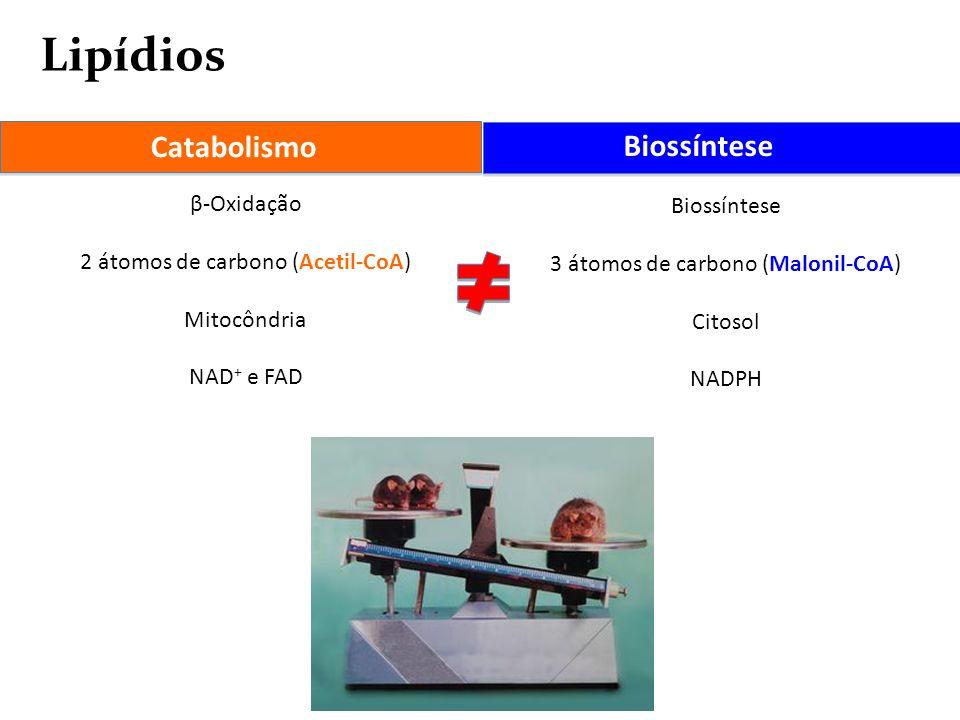 Lipídios Catabolismo Biossíntese β-Oxidação Biossíntese