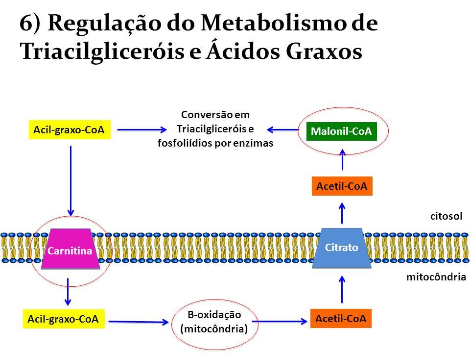 6) Regulação do Metabolismo de Triacilgliceróis e Ácidos Graxos