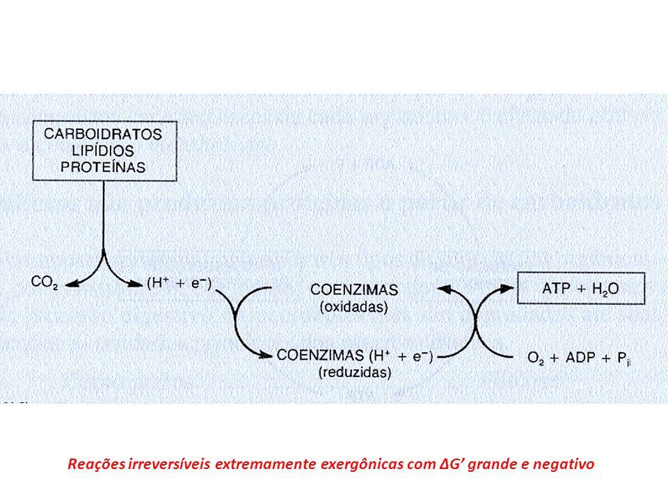 Os nutrientes ao serem oxidados perdem protons e eletrons (H+ + e-) e tem seus atomos de carbono convertidos a CO2. Os protons e eletrons sao recebidos por coenzimas na forma oxidada que passam assim a forma reduzida. A reoxidacao das coenzimas e obtida pela transferencia dos H+ + e- para o oxigenio molecular que e entao convertido a agua. A energia derivada desta oxidacao e utilizada para sintetizar um composto rico em energia o ATP a partir da ADP + Pi. E a energia quimica do ATP a que sera utilizada para promover os processos biologicos que consomem energia.