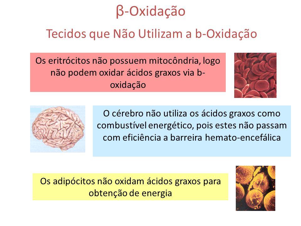 β-Oxidação Tecidos que Não Utilizam a b-Oxidação