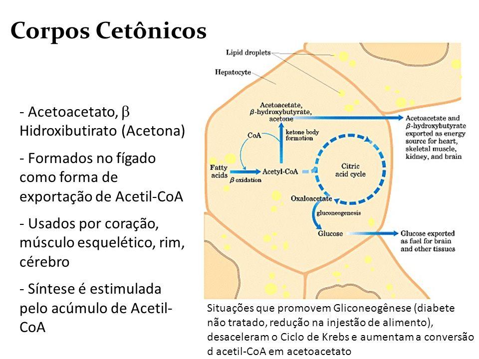 Corpos Cetônicos Acetoacetato,  Hidroxibutirato (Acetona)
