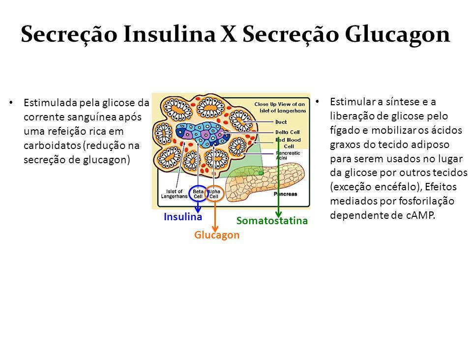 Secreção Insulina X Secreção Glucagon