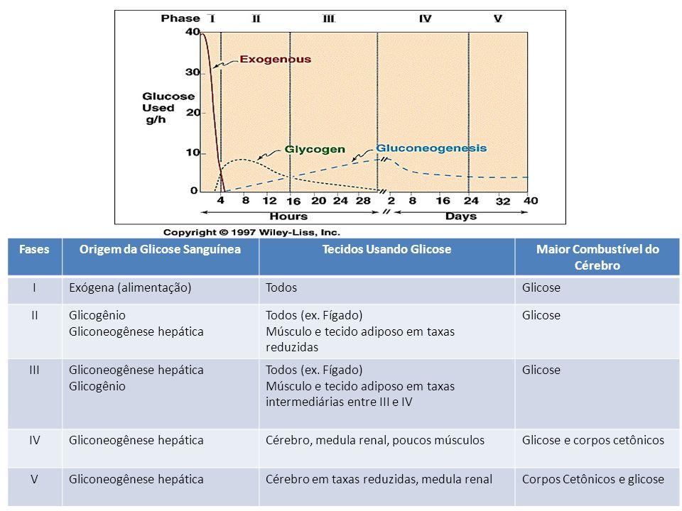 Origem da Glicose Sanguínea Tecidos Usando Glicose