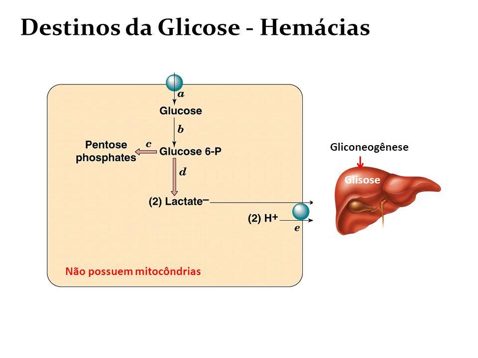 Destinos da Glicose - Hemácias
