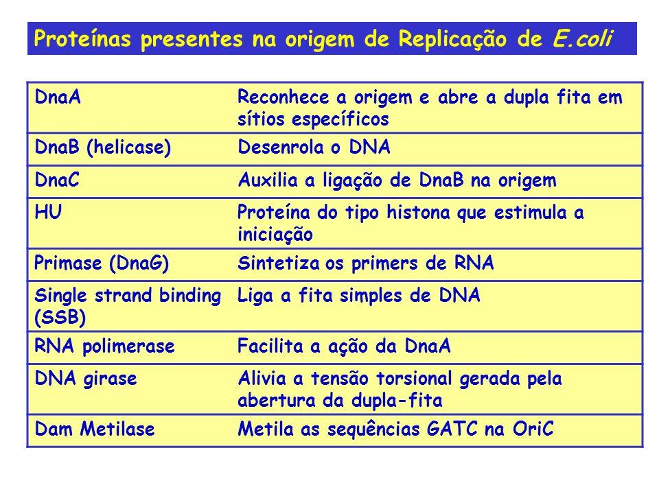 Proteínas presentes na origem de Replicação de E.coli