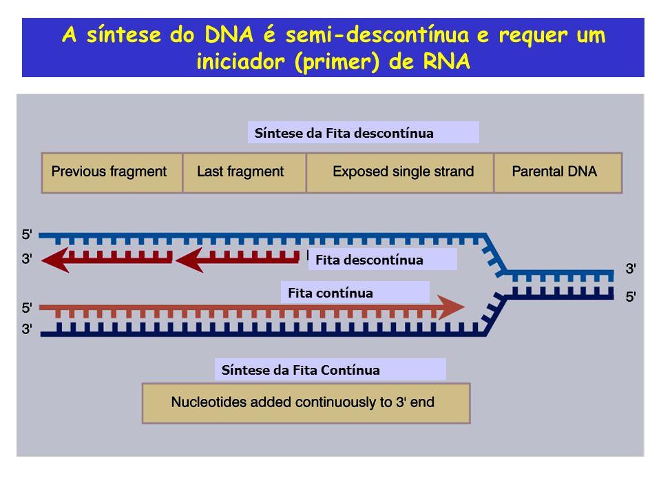 A síntese do DNA é semi-descontínua e requer um iniciador (primer) de RNA