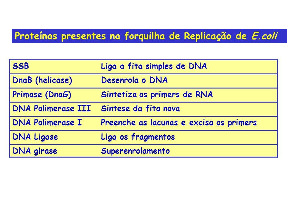 Proteínas presentes na forquilha de Replicação de E.coli
