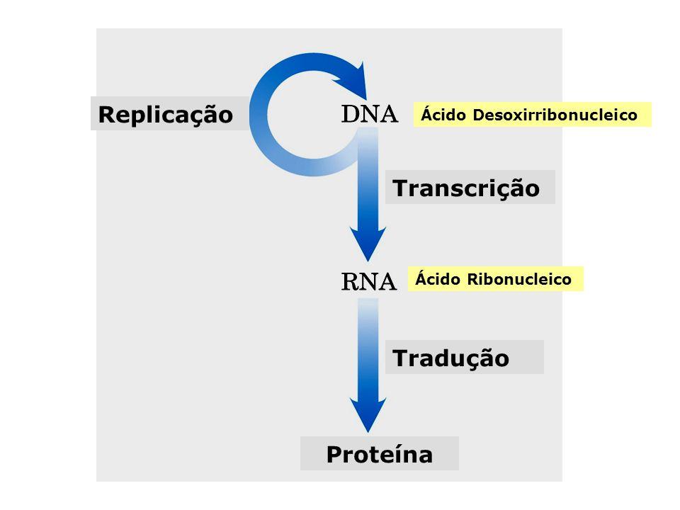 Replicação Transcrição Tradução Proteína Ácido Desoxirribonucleico