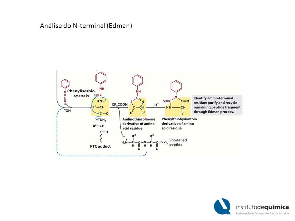 Análise do N-terminal (Edman)