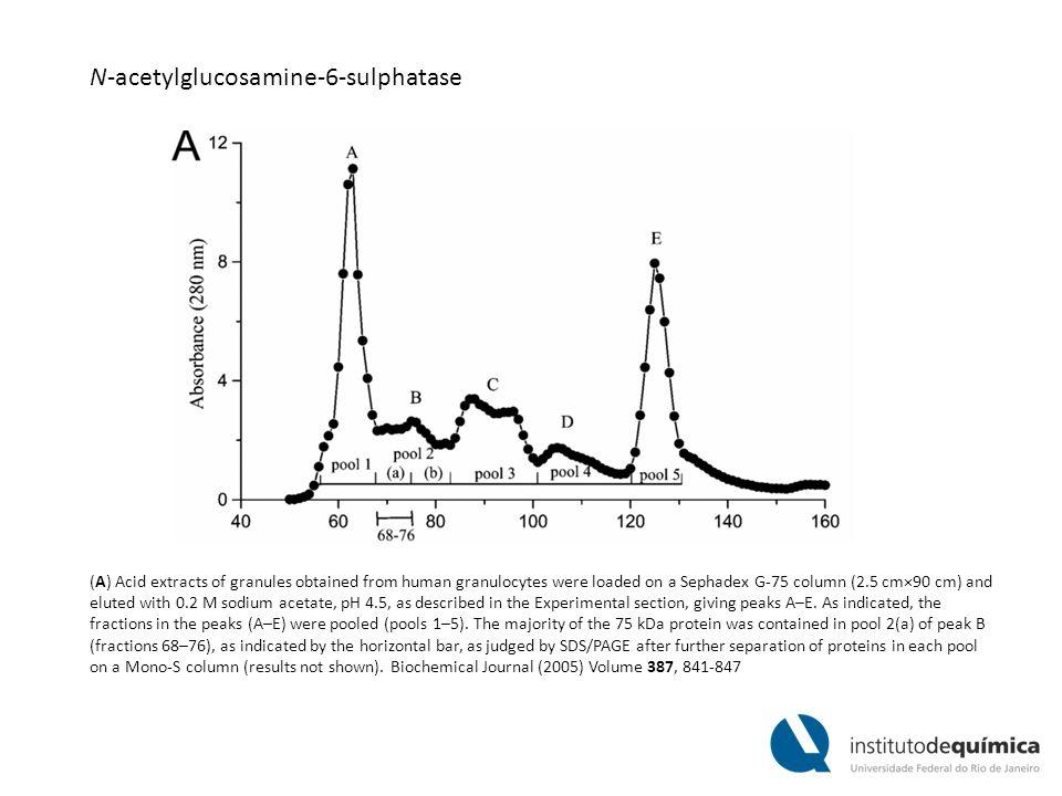 N-acetylglucosamine-6-sulphatase