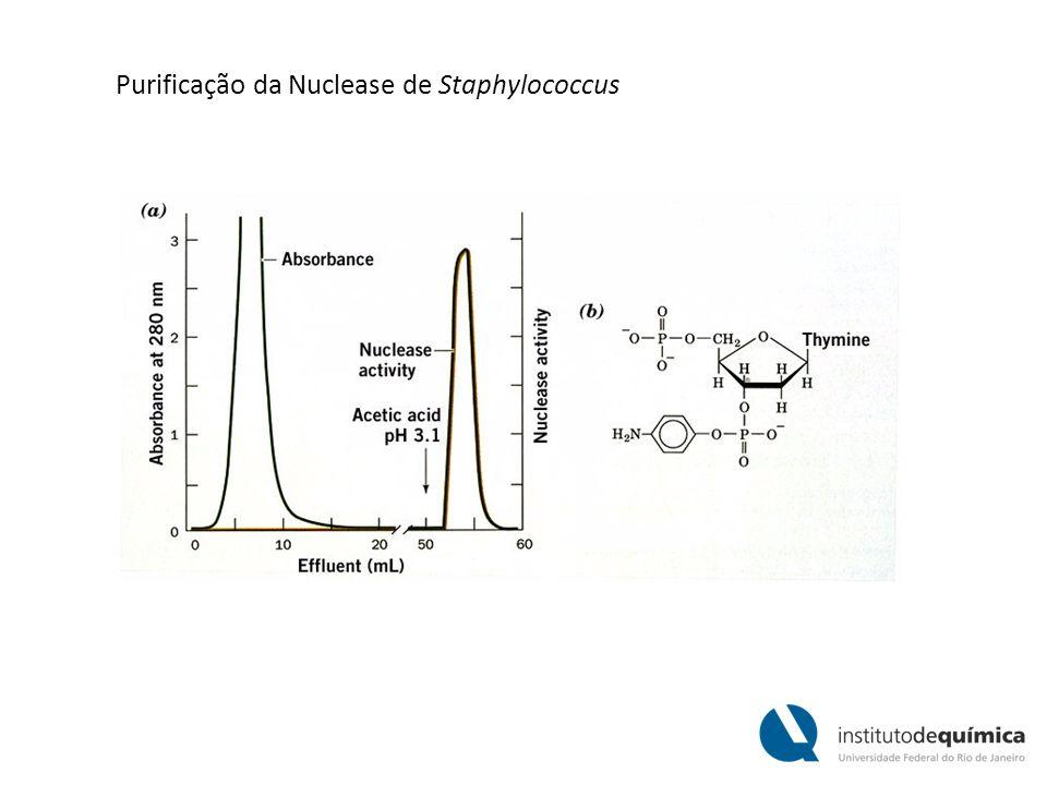 Purificação da Nuclease de Staphylococcus