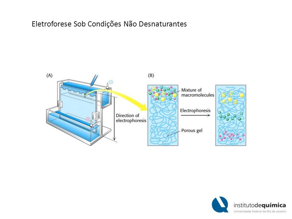 Eletroforese Sob Condições Não Desnaturantes