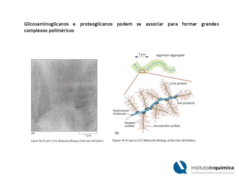 Glicosaminoglicanos e proteoglicanos podem se associar para formar grandes complexos poliméricos