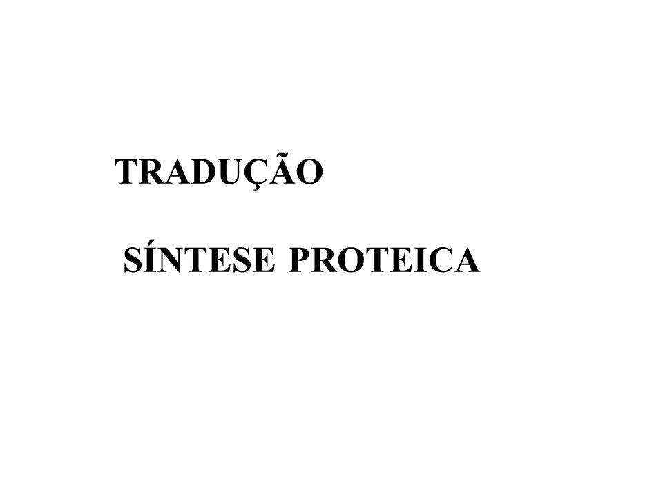 TRADUÇÃO SÍNTESE PROTEICA