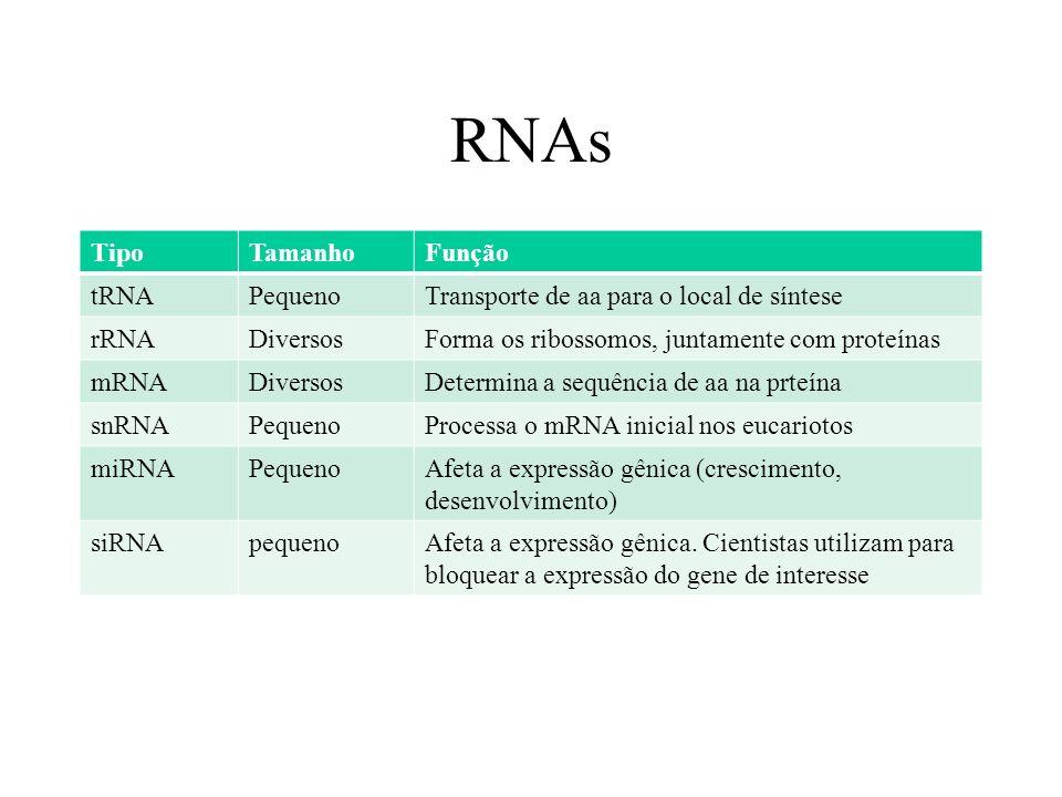 RNAs Tipo Tamanho Função tRNA Pequeno