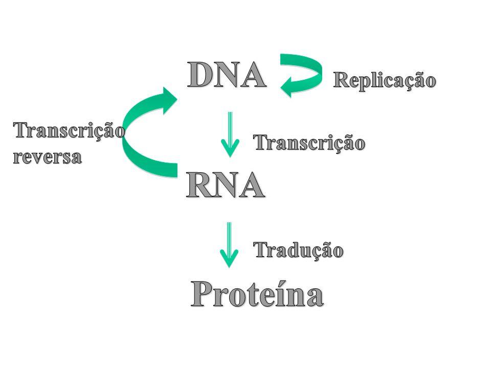 DNA Replicação Transcrição reversa Transcrição RNA Tradução Proteína