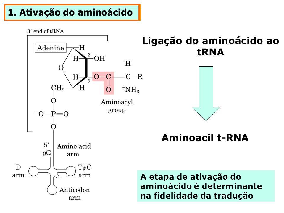 Ligação do aminoácido ao tRNA